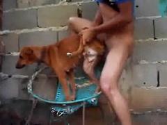 คลิปโป๊ man fuck dog หนุ่มฝรั่งตั้งกล้องแอบเย็ดหีหมาแม่ลูกอ่อนนมยานบนเก้าอี้ข้างกำแพงต่อหน้าลูกหมา